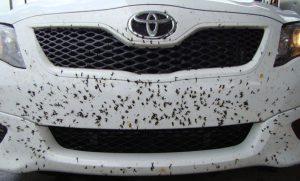 como-limpiar-insectos-coche